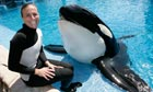 SeaWorld trainer Dawn Brancheau with killer whale