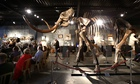 A woolly mammoth skeleton, called Monty, is sold at auction in Sussex