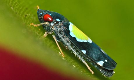 New to nature No 121: Cavichiana bromelicola