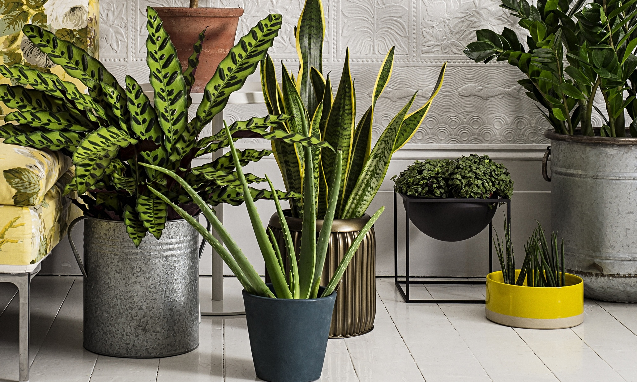 How to make the most of house plants life and style for Plant decorations home
