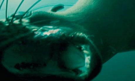 Dark Tide trailer 7