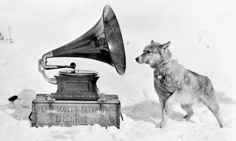 Chris the sled dog during Captain Scott's Terra Nova Expedition to the Antarctic, 1911
