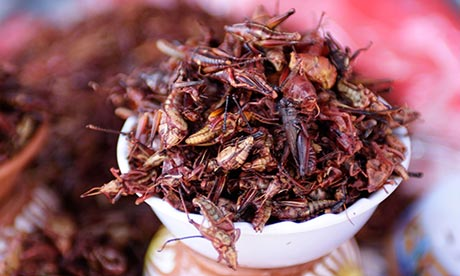 mexico-insects-food-008 - ...ug karon, kan-on nato ang Insik, este, insect - Science and Research
