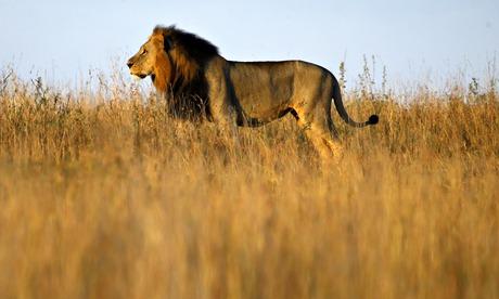 Wildlife pushed back as city encroaches on Nairobi national park