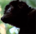 'Lemurs are a bit like Hollywood stars: Very, very beautiful, but a bit stupid'