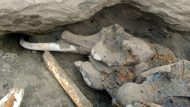 Mammoth found frozen in russia after 30 000 years video for Goldfischarten teich