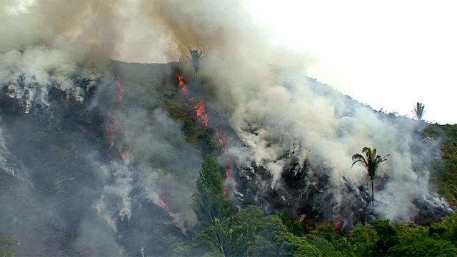 slash and burn method environmental science