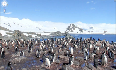 Penguins, Antarctica, Google Maps