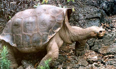 Galapagos Islands: Was Lonesome George Gay?