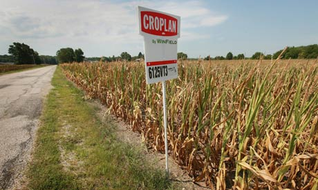 Indiana, drought, corn