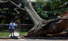 A US postal worker in Washington delivers a letter to a house with a felled tree outside