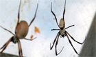 Trying to unravel the secret of spider silk - video