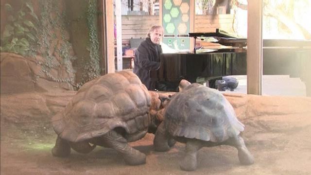 Tortoise style sex