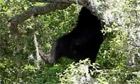 Black bear found in tree in Florida resident's garden