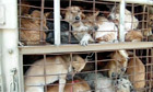 Dog trade Thailand