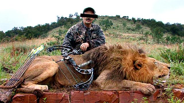 cazando un pobre leon en africa: