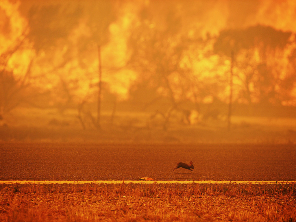 A rabbit runs from a wildfire burning along the Pacific Coast Highway