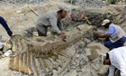 Paleontologist Rescue A Unique Articulated Tale From A Dinosaur In Mexico