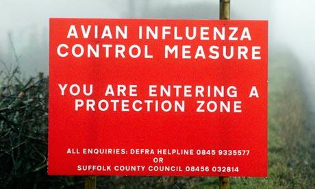 Outbreak of bird flu at suffolk turkey farm