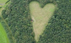 giant heart formed with 6000 oak trees