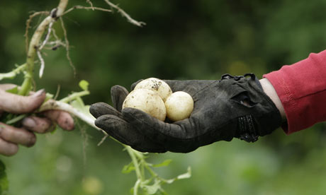 Members of the Shared Garden Project tend to their vegetables at an allotment in Nottingham
