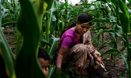 kusum working in her own field which is less then 1acre