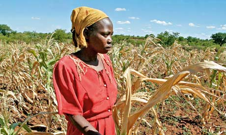 Loyce Nkala stands by her drought devestated maize crop in Filabusi, south west Zimbabwe
