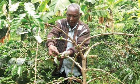 J A Tesha, coffee grower, Kilimanjaro, Tanzania