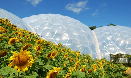 Eden Project and sunflowers in Cornwall, UK