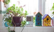 British Gas smart meter among plants and bird houses