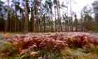 Autumn Scene in the North Yorkshire Moors, Dalby Forest