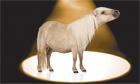 A pony in the spotlight