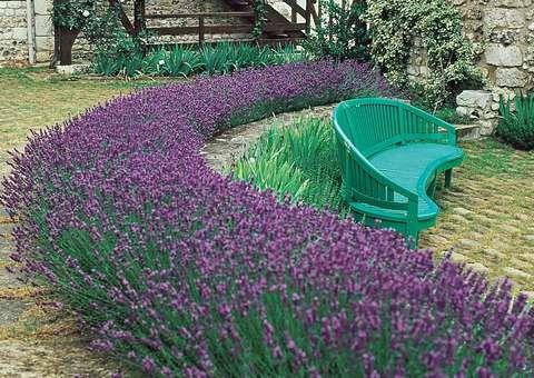 Offers:Lavender garden