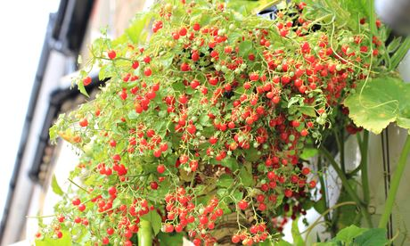 Colourful plant with green leaves and red berries