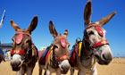 Beach Donkeys.