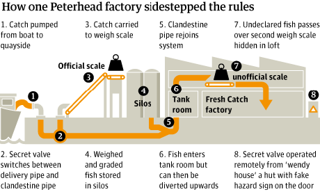 Black fish factory graphic