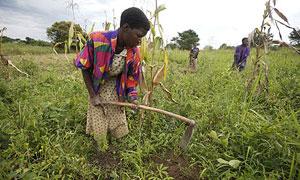 Katine farmer woman 300x180