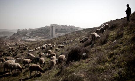 A Palestinian shepherd watches his flock near the Israeli settlement of Har Homa, near Bethlehem