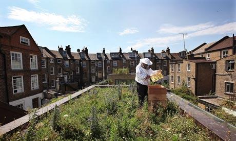 Μελισσοκόμος John Chapple εγκαθιστά μια νέα κυψέλη μελισσών σε ένα αστικό κήπο του τελευταίου ορόφου στο Hackney, Λονδίνο