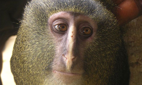 new-species-of-monkey-k-007.jpg