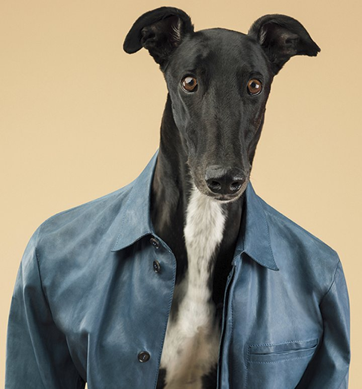 The Greyhounds of Trussardi 2014 ad campaign