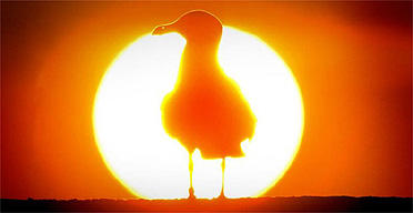 A bird silhouetted against the sun in Cellardyke, Fife