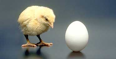 Chicken or Egg?