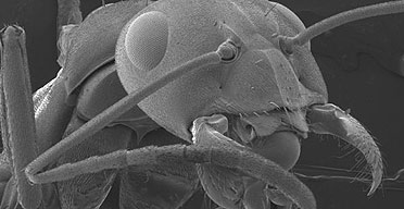 ant under a microscope - photo #20