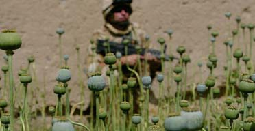 A British soldier on patrol in a poppy field in Helmand province