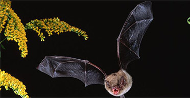 Guardian article on bats