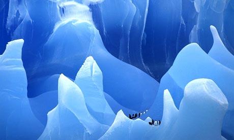 penguins in antarctica. Penguins on an iceberg in