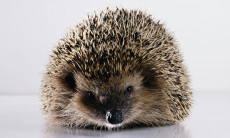 hedgehog10b.jpg