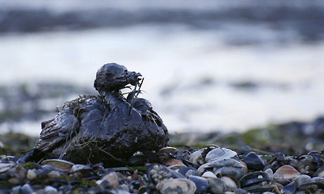 A bird covered in fuel oil