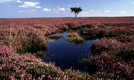 Peat bog in the North York Moors. Photograph: Alamy